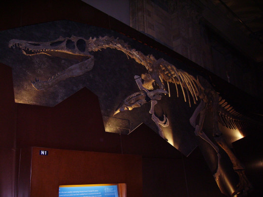 Baryonyx wall at the Natural History Museum, London.