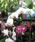 13 Flowering Houseplants