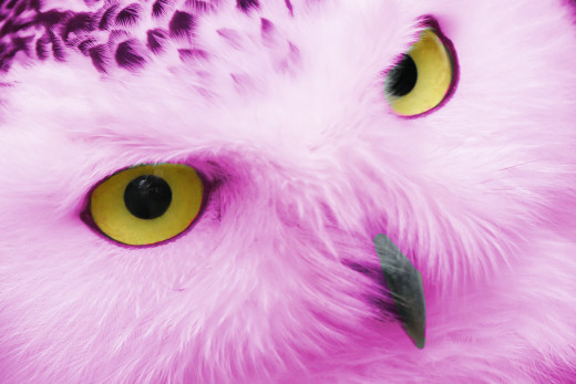 """The same owl with a pink fill layer blended in """"overlay"""" mode."""