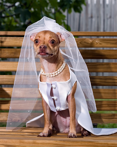 If it starts raining dogs dressed like this, it's time to move your wedding indoors.