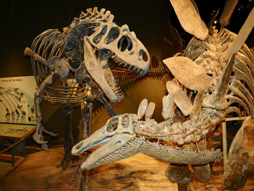 Classic Jurassic match-up at the Denver Museum of Nature and Science.