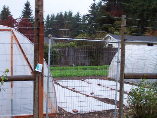 Another community garden in Olympia
