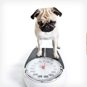 make a point of weighing your dig at least once a month to keep track of any trend in weight loss or gain.