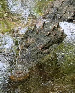 Interesting Facts About The Crocodile