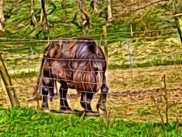 A beautiul Shetland pony.