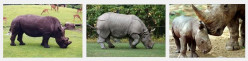 Javan Rhinoceros - A Critically Endangered Species