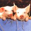 animalsarenotfood profile image