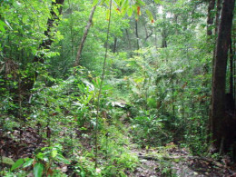 Jungle at Ujung Kulon National Park