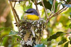 The Birdies in Her Nest