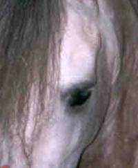 Are Horses Color Blind?