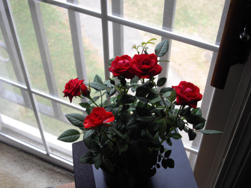 Flowers are great gifts for some women. Potted plants can last for quite a long time, with proper care