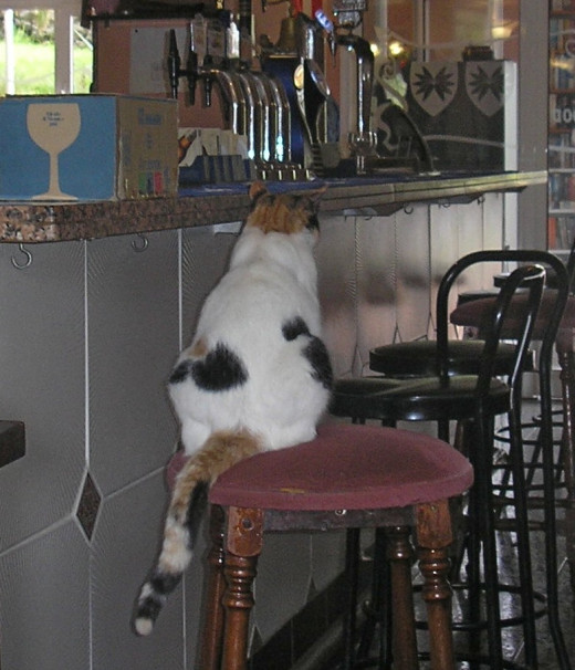 Where cats sit at the bar