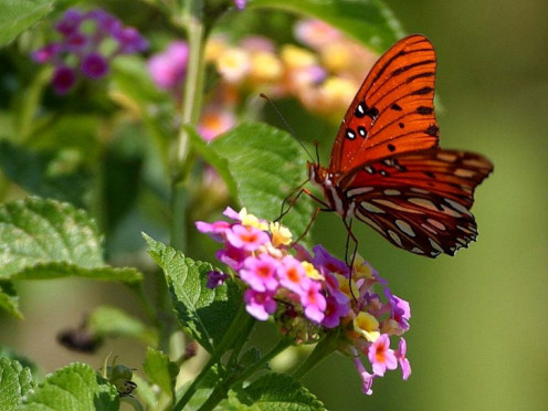 This file (Butterfly in Louisiana) is in public domain, not copyrighted, no rights reserved, free for any use.