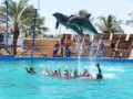 Dolphin Assisted Therapy Is a Success
