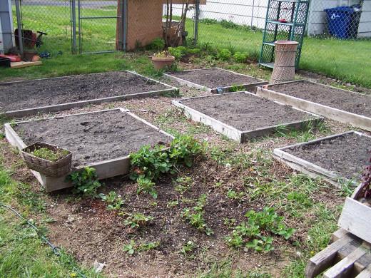 The expanding garden
