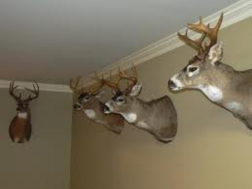Deer Mounts are an excellent way to decorate a log cabin out in the middle of the woods.