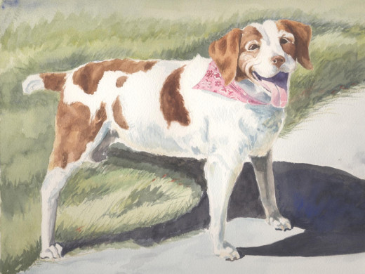 "New Tricks (Pretty in Pink) watercolor 11 x 14"" This is Britta, our sprightly elderly Brittany Spaniel"