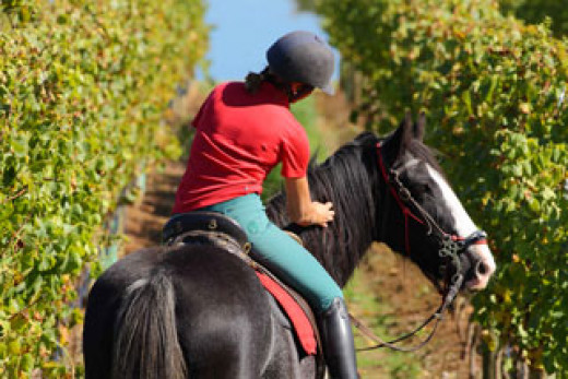 Tour Australian wineries on horseback