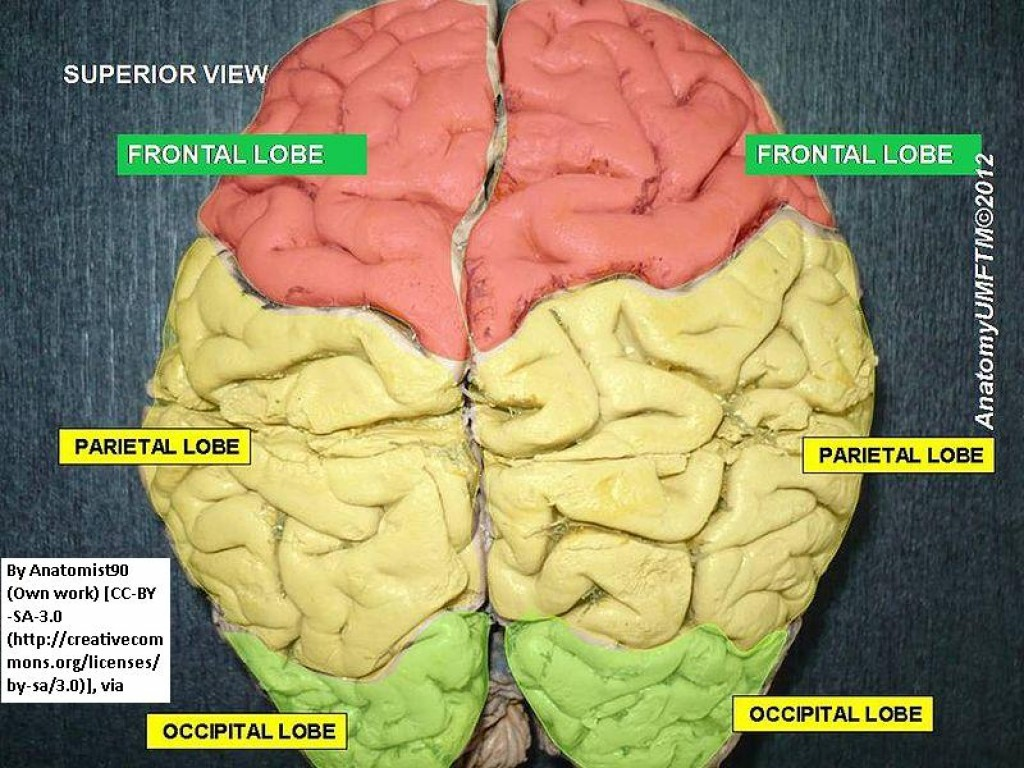 Which Side of Your Brain is Dominant - Does It Have Any ...