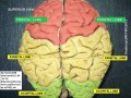 Which Side of Your Brain is Dominant - Does It Have Any Significance?