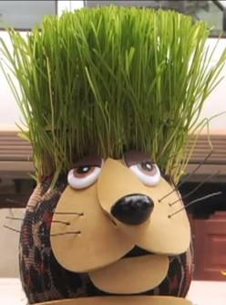 Do you know how to make a Grass Head?