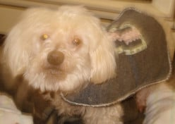 How to Sew an Easy Dog Coat