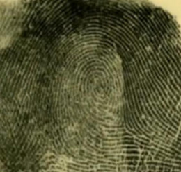 Latent fingerprints are made from oil and sweat on human skin surface