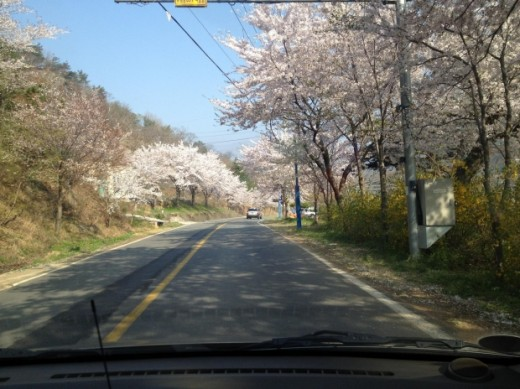 The beauty of Earth can always be appreciated through driving.