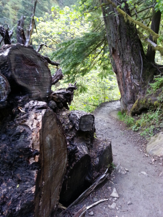 The hiking trail to Wahclella Falls.