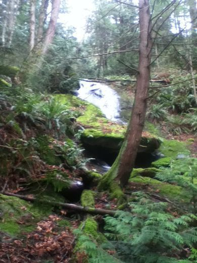 Waterfall On Two Dollar Trail