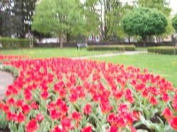 Colonel John McCrae Memorial Gardens, Guelph