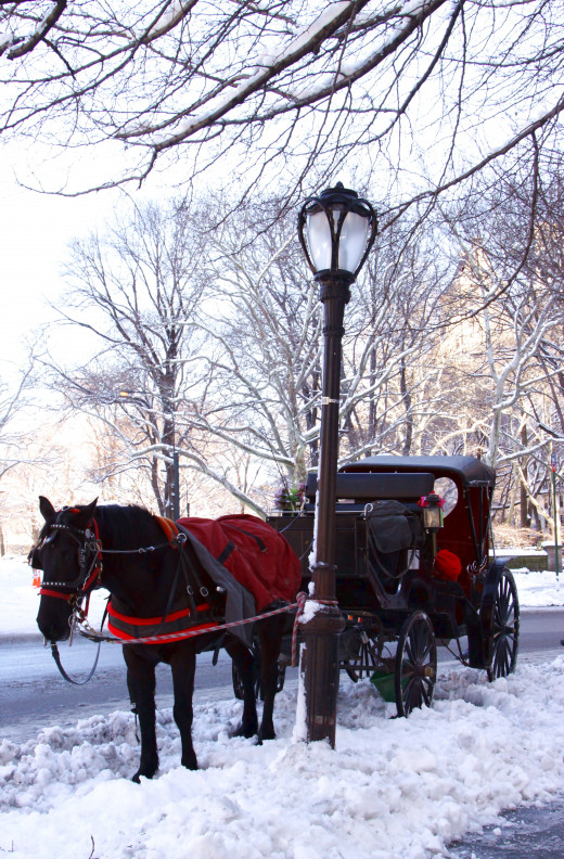 Take a ride in a horse-drawn carriage.