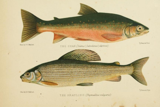 British freshwater fish