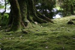 Moss Lawns