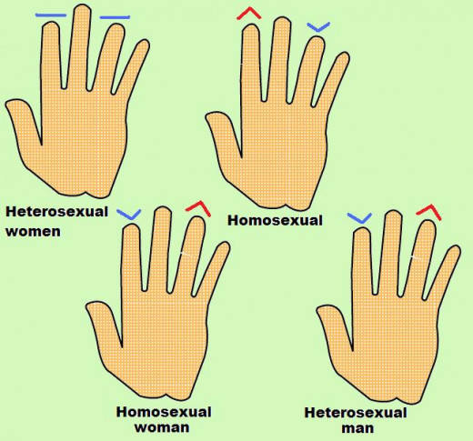 The length of your index finger and ring finger can tell about your sexuality