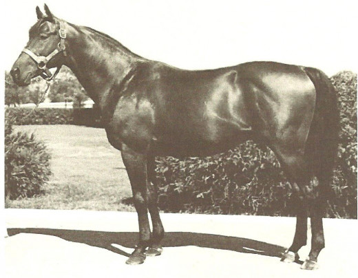 Citation, above, won the Preakness Stakes by 5-1/2 lengths in his 1948 Triple Crown season. The Preakness record for margin of victory, however, is held by 2004's Smarty Jones -- 11-1/2 lengths.