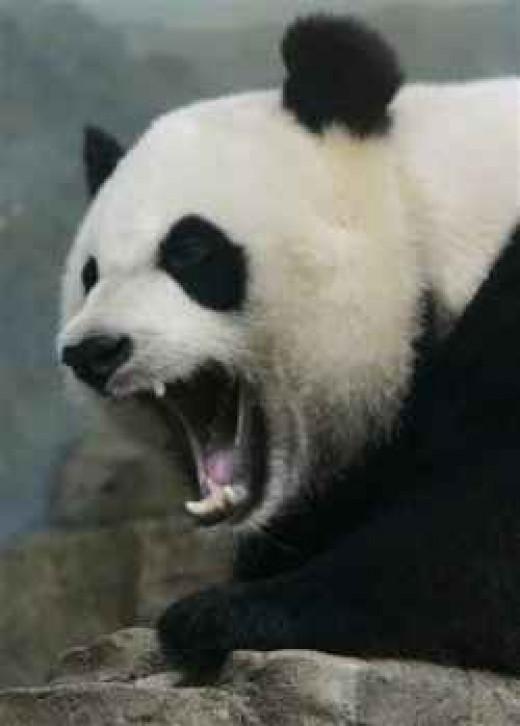 Google Panda Attack