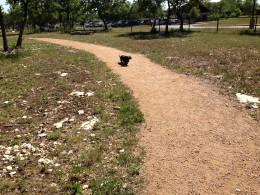 Cedar Park Bark Park Happy Dog Trails - Cedar Park TX