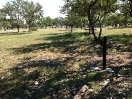 Cedar Park Bark Park Tree Shaded Dog Play Areas - Cedar Park TX