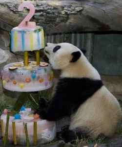 Google Panda was two years old in 2013.