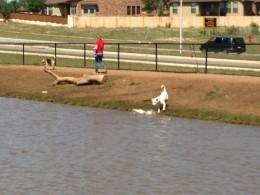 Lets Play - Cedar Park Bark Park Dog Lake - Cedar Park TX