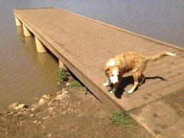Do I have too? - Cedar Park Bark Park Dog Lake - Cedar Park TX