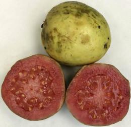 Guavas