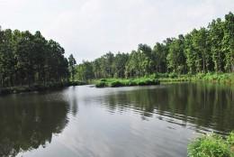 Lake in Koshi Tappu National Park in Nepal