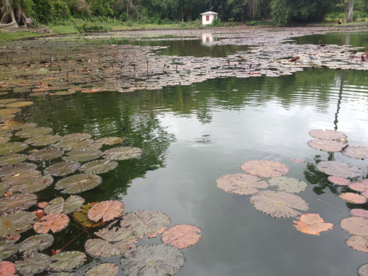 The view across the pond at Codrington College