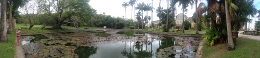 Panoramic view of the pond and surrounding area at Codrington