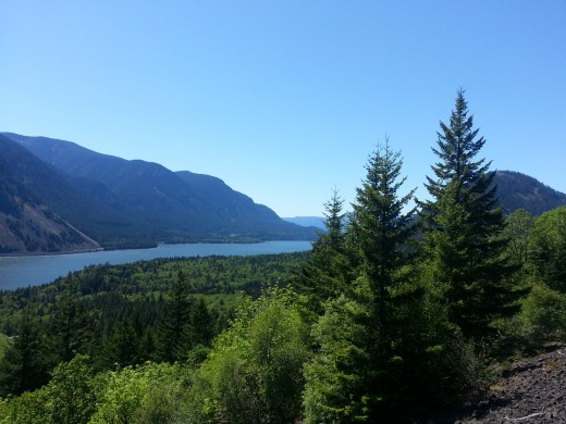A peek at the Columbia River Gorge through the trees.