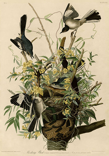 Audubon, in his time, was one of the most famous wildlife artists.