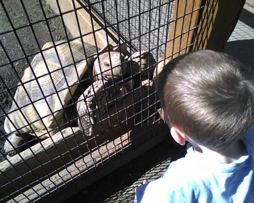 I think the turtle wanted to eat his fingers, but we told my son he really wanted to be friends and play.