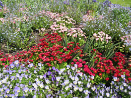 A flower bed